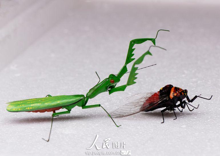 螳螂手工制作图片