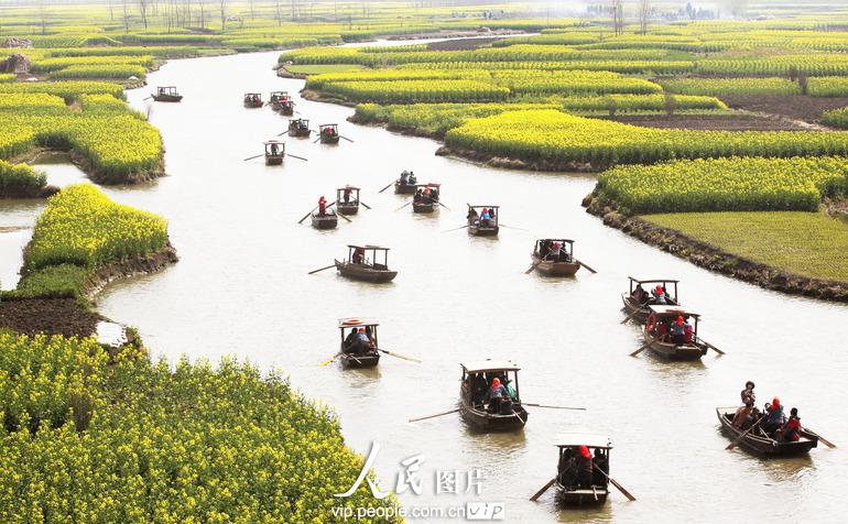 4月3日,游人乘船在江苏兴化市缸顾乡千岛菜花风景区欣赏盛开的油菜花.