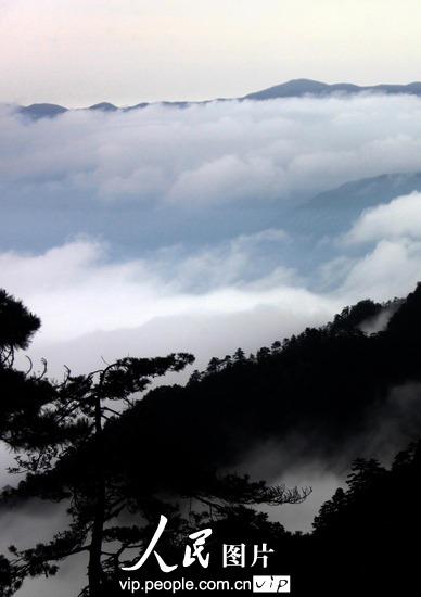 黄山风景区出现迷人壮观云海(图)