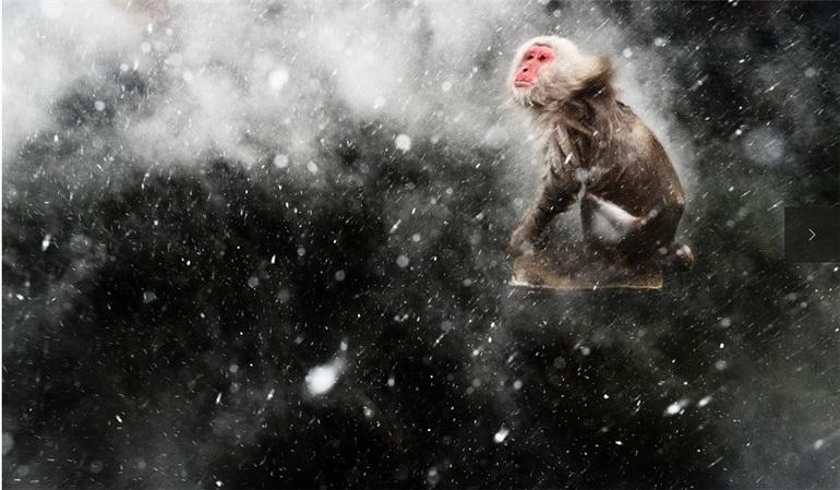 2013年度野生动物摄影师奖的获得者已经揭晓