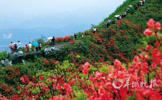 百里杜鹃旅游景区 图片来源:羊城晚报