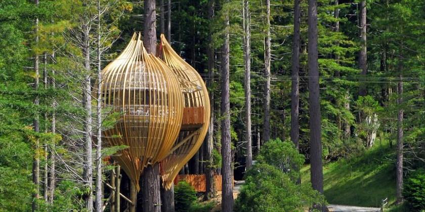 据英国《每日邮报》5月14日报道,在新西兰奥克兰市一棵高40米,直径1.7米的红杉树上,有一家红木树屋餐厅(Redwoods Tree ),其外观看上去如蝶蛹,附在树干上。夜晚在这里用餐,感觉如同走进电影《阿凡达》中的场景,神秘、静谧、令人难忘。   据悉,红木树屋餐厅座落在奥克兰以北60公里的广袤森林中,大家无从得知它的确切方位和电话号码,只要在网上订座成功后,餐厅才会把详细行车线路通知顾客,这给树屋餐厅抹上一层浓浓的神秘色彩。   建筑师彼得艾兴表明,餐厅的规划创意来源于大自然,人坐在树屋里边,会