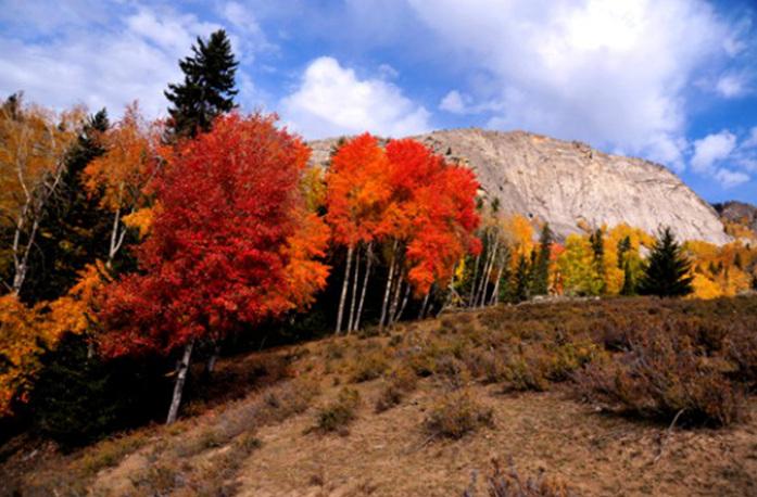 新闻网) 景区简介:可可托海风景区暨可可托海国家地质公园,位于新疆
