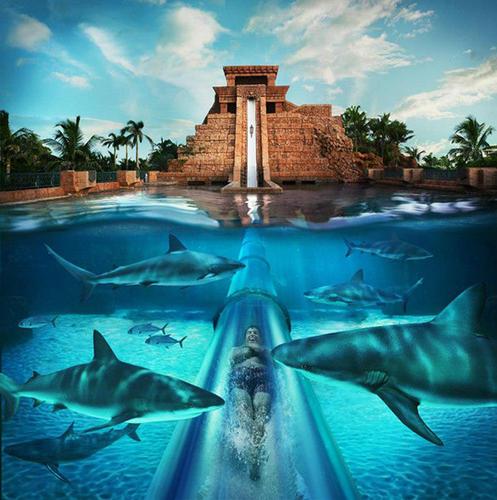 旅游胜地:出境避暑游 畅游世界五大顶级水上乐园(组图)