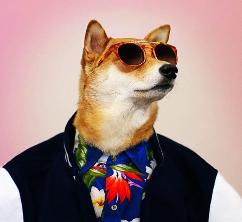 高清:纽约宠物狗穿男装造型走红 成网络明星