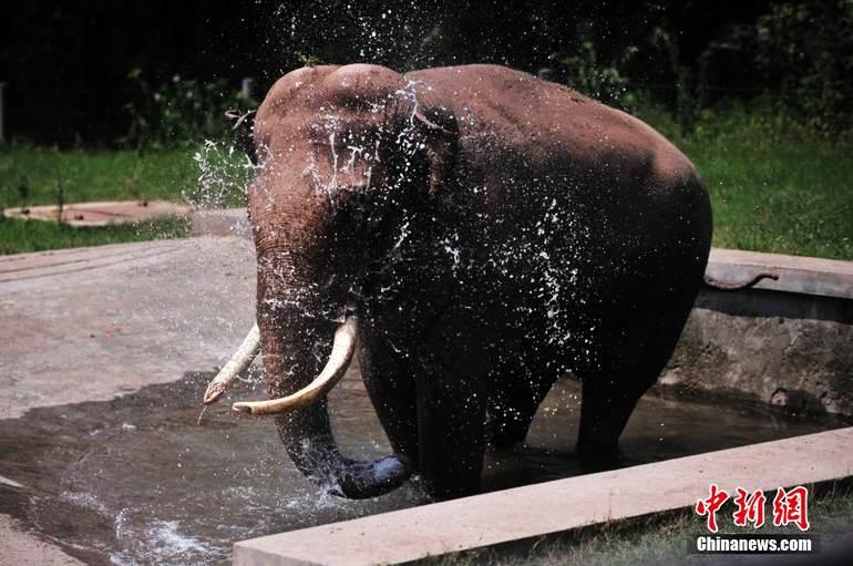 高清:重庆动物园投喂冰块为动物防暑降温【3】