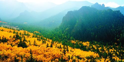 贺兰山原始森林
