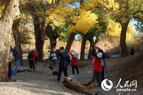 中国·额济纳金秋胡杨生态旅游节