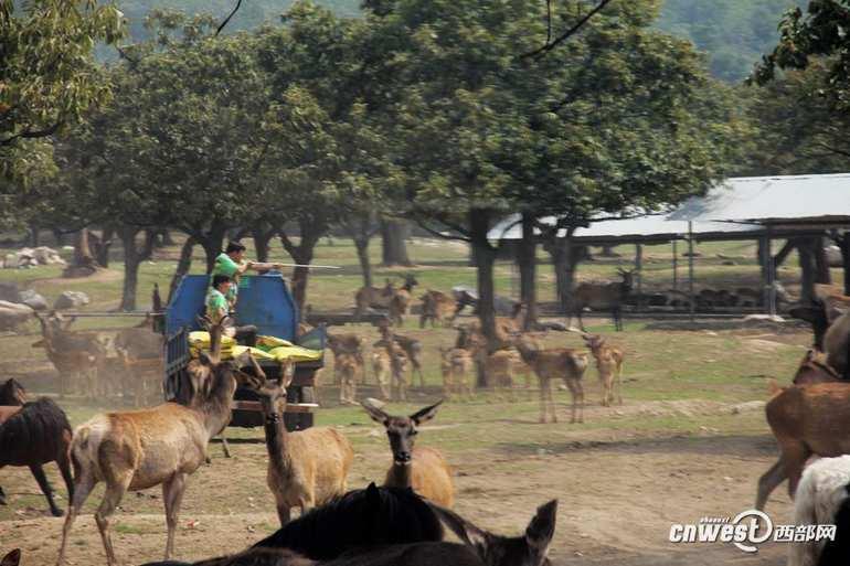 南充动物园的景点路线示意图