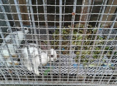 """高清:南充动物园被指虐待动物 网民称其""""动物集中营"""""""