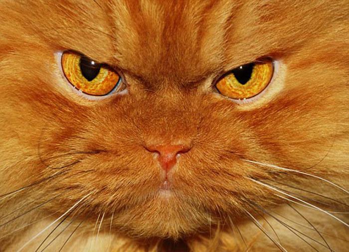 据英国《每日邮报》10月6日报道,继美国暴躁猫因臭脸走红之后,近日,土耳其一只名为加菲(Garfi)的波斯猫也因其眉头紧皱、唯我独尊的神态获得了众多粉丝,其愤怒的表情甚至超过了暴躁猫。 加菲的主人胡力亚奥兹考克(Hulya Ozkok)为其拍了100多张照片,每一张都将加菲愤怒的表情展现得淋漓尽致,照片被传到图片分享网站Flickr以后,点击率已超过1.