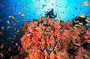 水下摄影师的奇幻之旅