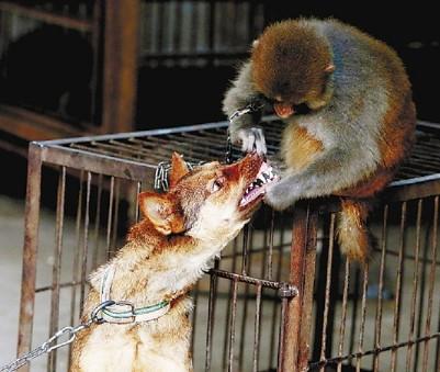 消费旅游         国家颁布的《全国动物园发展纲要》,要求杜绝任何