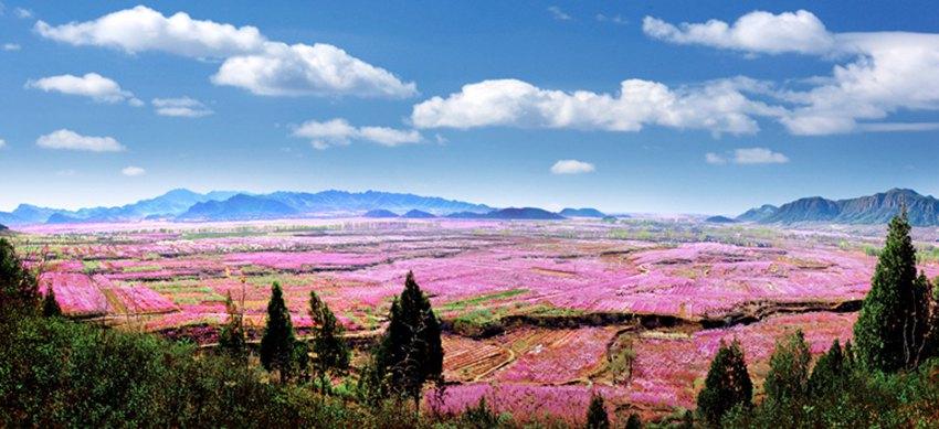 中国肥城桃花节有哪些旅游景点?