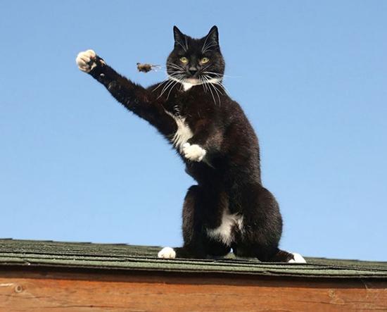 高清 猫和老鼠 现实版猫咪逆袭 老鼠被猫戏弄图片