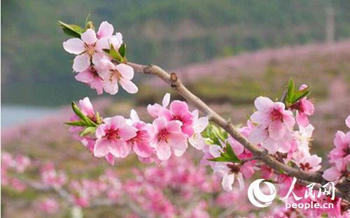 桃花折纸作步骤图解