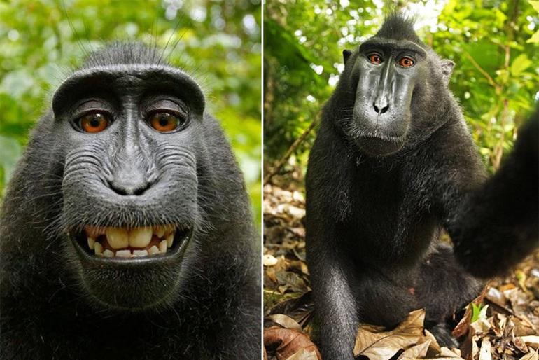 有趣的动物的图片