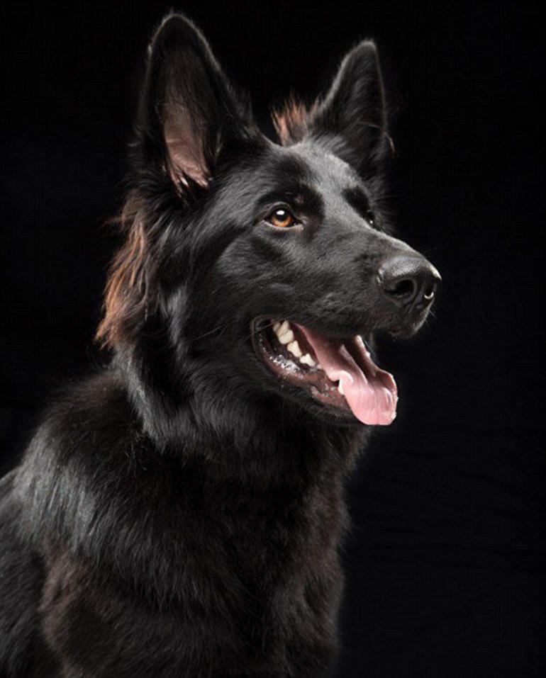 高清:美摄影师为黑色狗拍美照拟破除迷信【3】