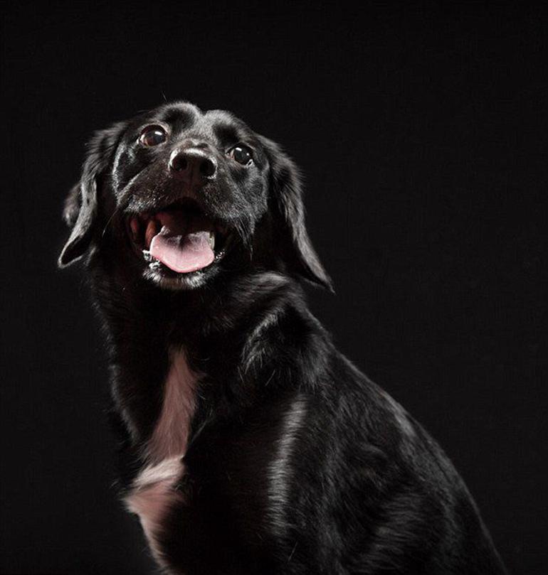 高清:美摄影师为黑色狗拍美照拟破除迷信【4】