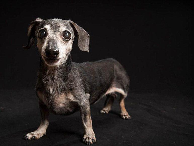 高清:美摄影师为黑色狗拍美照拟破除迷信