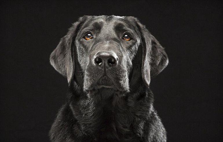 高清:美摄影师为黑色狗拍美照拟破除迷信【9】
