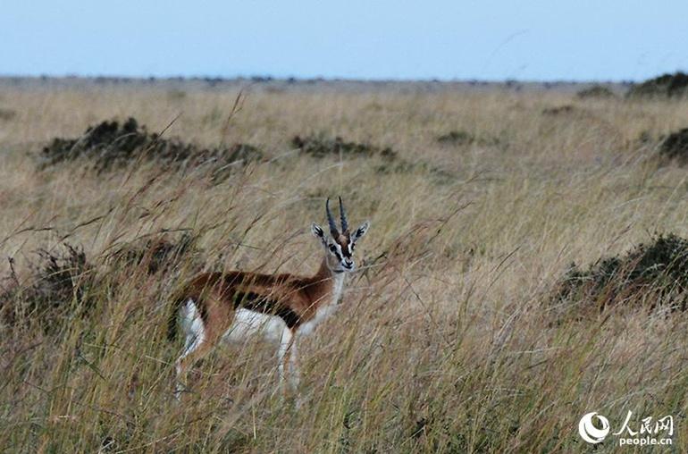 高清:走进肯尼亚的动物世界