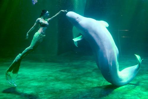 北京海洋馆,坐落在北京动物园内长河北岸
