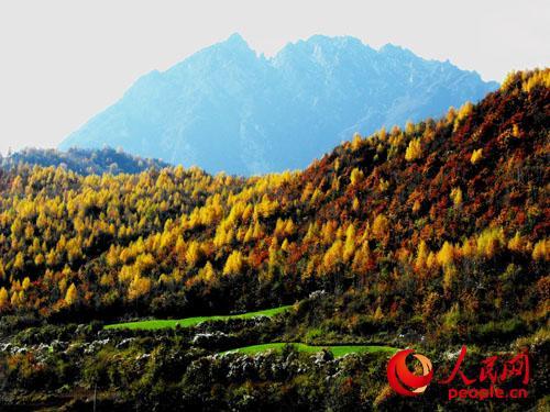 """甘肃莲花山国家森林公园被列入首批""""中国森林氧吧"""""""