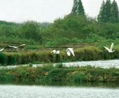 江苏震泽省级湿地公园