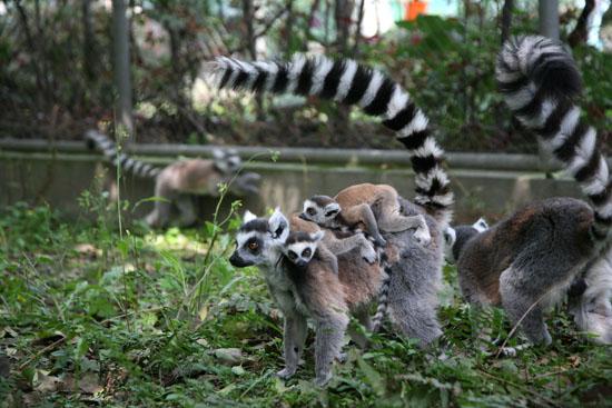 现实版《疯狂动物城》!盘点国内最火的七大动物园