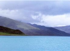 羊湖的大雁(许涛涛 摄)