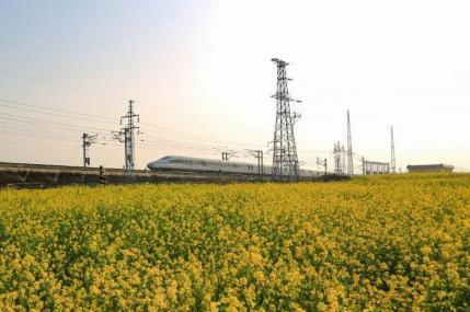 开往春天的列车 穿梭油菜花海美如画