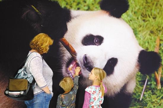 """6月24日,在舍内费尔德机场欢迎大厅内,前来欢迎大熊猫的德国儿童抚摸""""娇庆""""的照片。"""