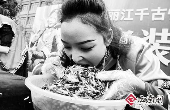 丽江景区举行吃昆虫大赛 冠军5分钟吃1.23公斤