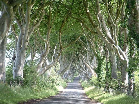 北爱尔兰的安特里姆郡黑暗树篱。TripAdvisor(猫途鹰)供图