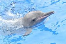 妈祖诞日成中华白海豚保护宣传日