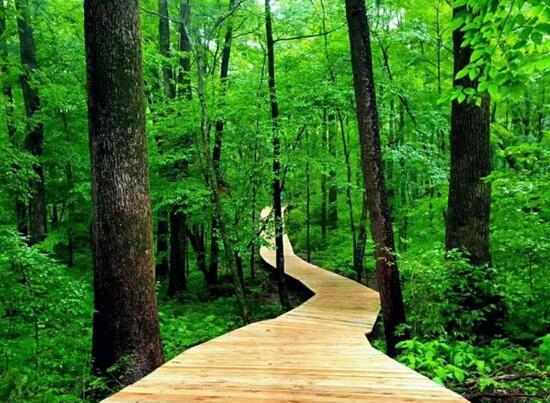 红石国家森林公园的森林氧吧是最适合呼吸的地方,3.
