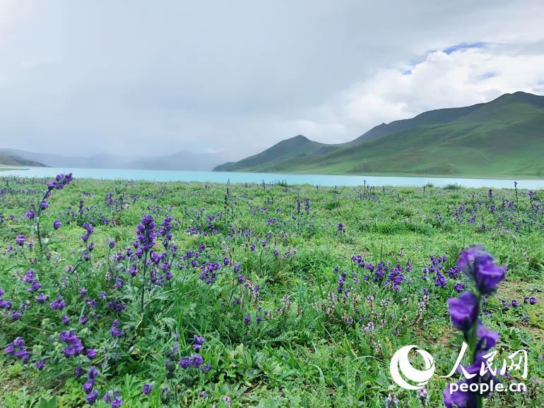 羊湖集高原湖泊、雪山、岛屿、牧场、温泉、野生动植物等多种景观为一体。人民网记者 王京 摄