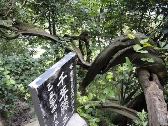 黔江水车坪景区正式获批为国家AAAA级旅游景区