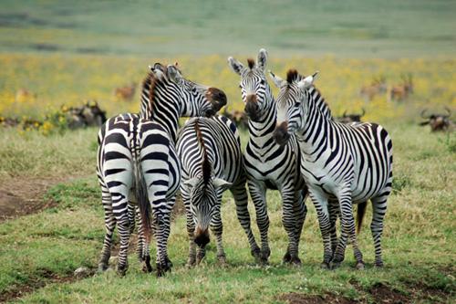 > 在非洲大草原上奔跑