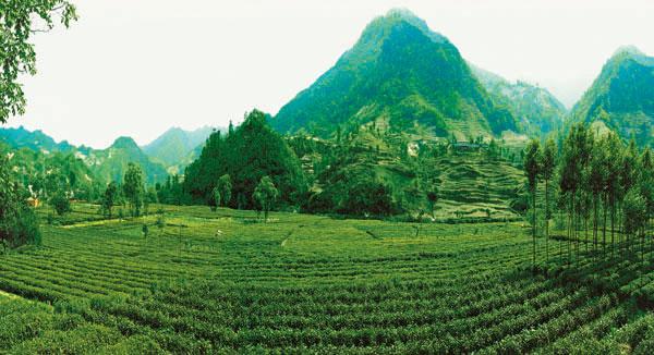 康县阳坝亚热带风景区
