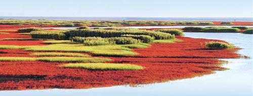 第三届中国(盘锦)国际湿地旅游周 - 城市形象网 - 城市形象网