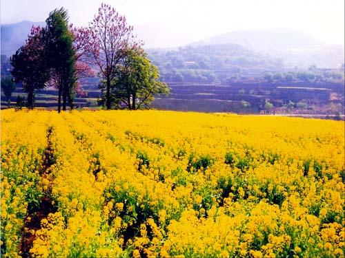 淄博峨庄; 峨庄水利风景区位于淄川区东南部; 春菜花