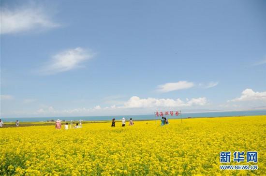 """(新华全媒头条·图文互动)(8)大湖见证 ——持续保护让青海湖生态华丽""""蝶变"""""""