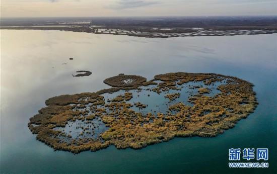 (环境)(7)水生态改善乌梁素海成鸟类天堂